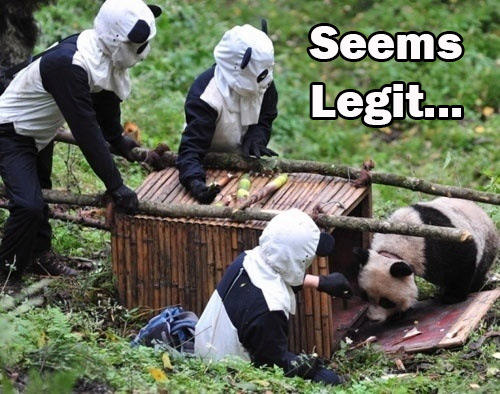 seems-legit-to-panda.jpg